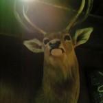 【review】罠【グルメ】【待て、それは孔明の】【鹿】【not鹿島】